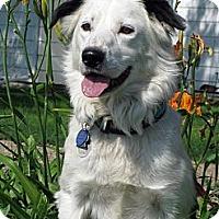 Adopt A Pet :: Marley - Glenrock, WY