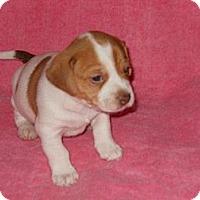 Adopt A Pet :: Nicholas - Wilmette, IL