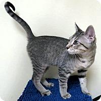Adopt A Pet :: Sulu - Edmond, OK