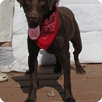 Adopt A Pet :: Rocket - Oakland, AR