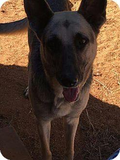 German Shepherd Dog Dog for adoption in Lake In The Hills, Illinois - Tara