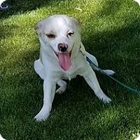 Adopt A Pet :: Honey - Sherman Oaks, CA