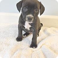 Adopt A Pet :: Escalade - Spring Lake, NJ