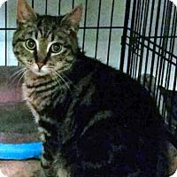 Adopt A Pet :: Bart - Queens, NY