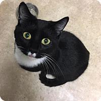 Adopt A Pet :: Antoinette (Toni) - Herndon, VA