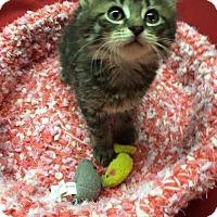 Adopt A Pet :: Poppy - Butner, NC