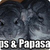 Adopt A Pet :: Papasan & Hops - Virginia Beach, VA