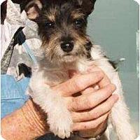 Adopt A Pet :: Sissy - Duluth, GA