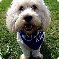 Adopt A Pet :: Peter Brady - Baton Rouge, LA