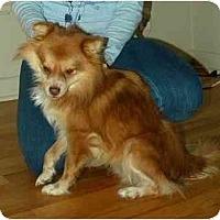 Adopt A Pet :: Mickey - Seattle, WA