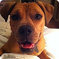 Adopt A Pet :: Sangria - Hagerstown, MD