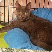 Adopt A Pet :: Trouper - Plainview, NY