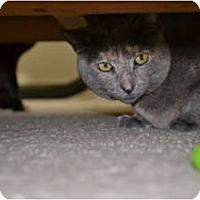 Adopt A Pet :: Greystar - Laguna Woods, CA