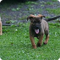 Adopt A Pet :: Neil - Morgantown, WV
