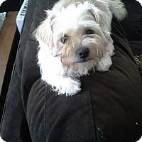 Adopt A Pet :: Harley Quinn - Freeport, NY