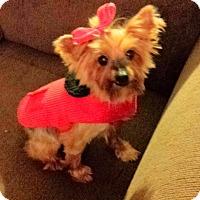 Adopt A Pet :: Callie - Ashland City, TN