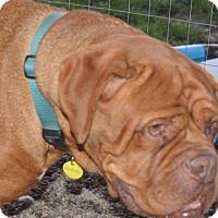 Adopt A Pet :: Aubree - Prole, IA
