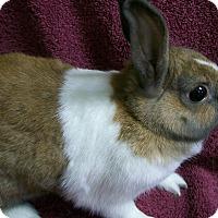 Dutch Mix for adoption in Harrisburg, Pennsylvania - Willow