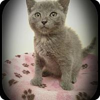 Adopt A Pet :: Ivy & Elf - Richmond, VA