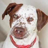 Adopt A Pet :: BRUNO - Kyle, TX