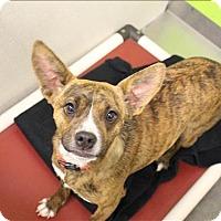 Adopt A Pet :: Stripes - Neosho, MO