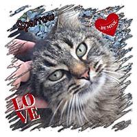 Adopt A Pet :: Sparrow - Harrisburg, NC