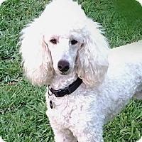 Adopt A Pet :: Porter - Irvine, CA