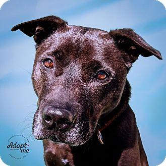 Labrador Retriever/Chow Chow Mix Dog for adoption in Long Beach, New York - Tai