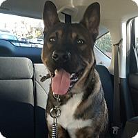 Adopt A Pet :: Miska - Cerritos, CA