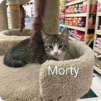 Adopt A Pet :: Morty - Buffalo, NY