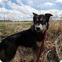Adopt A Pet :: Bella - Egremont, AB