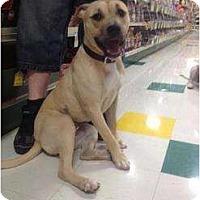 Adopt A Pet :: Mizza - Grand Rapids, MI