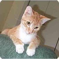 Adopt A Pet :: Tiny Tim - Lake Charles, LA