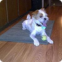 Adopt A Pet :: Sinatra in Houston - Houston, TX
