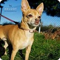Adopt A Pet :: Penny R. Cade - South Amboy, NJ
