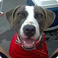 Adopt A Pet :: Peggy Sue - Bloomingdale, GA
