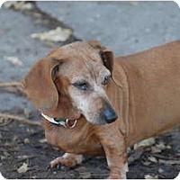 Adopt A Pet :: Vera - Ft. Myers, FL