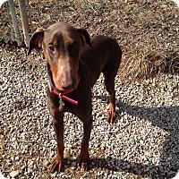 Adopt A Pet :: Aspen - New Richmond, OH