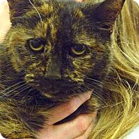 Adopt A Pet :: Angel - Pittstown, NJ