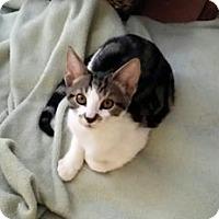 Adopt A Pet :: Graucho - Delray Beach, FL