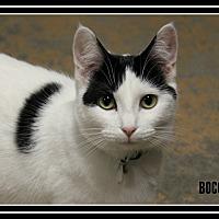 Adopt A Pet :: Bocce - New Richmond,, WI