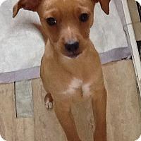 Adopt A Pet :: Logan - Georgetown, KY