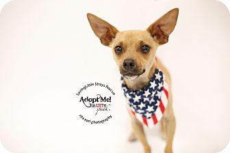 Chihuahua/Dachshund Mix Puppy for adoption in Aqua Dulce, California - Scooby