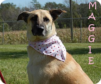 Shepherd (Unknown Type) Mix Dog for adoption in Bucyrus, Ohio - Maggie
