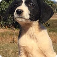 Adopt A Pet :: Hannah - Plainfield, CT