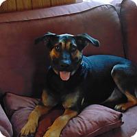 Adopt A Pet :: Sadie Sue - Greeneville, TN
