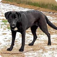Adopt A Pet :: CYPRESS - Washington, DC