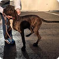 Adopt A Pet :: Winter - Cashiers, NC