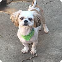 Adopt A Pet :: Gretchen - McKinney, TX