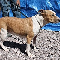Adopt A Pet :: Colorado - Golden Valley, AZ